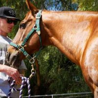 equine-therapy-drug-rehab-anthony